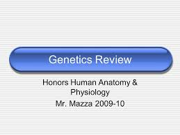 Human Anatomy And Physiology Review Genetics Review Honors Human Anatomy U0026 Physiology Mr Mazza Ppt