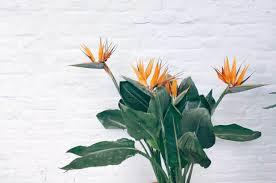 10 easy care plants for top 10 low maintenance plants melbourne international flower