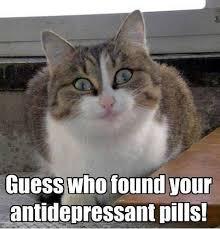 Weird Cat Meme - weird cat meme
