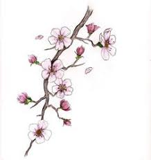 drawings of cherry blossom branch search illustration