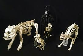 Halloween Pictures Skeletons Prop Showcase Crazy Bonez Skeletons Page 3