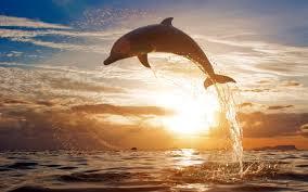 dolphin images 46 wujinshike com