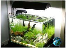 live aquarium plants ebay