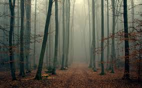 wallpaper wood trees fog foliage autumn cool hd picture image