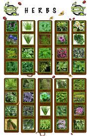 aquaponic herb growing backyard aquaponics