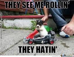 Funny Cute Animal Memes - cute dog memes best collection of funny cute dog pictures