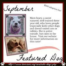 boxer dog rescue florida boxer aid u0026 rescue coalition home facebook
