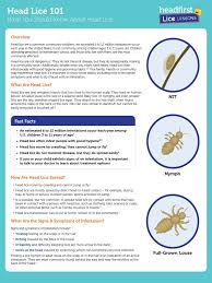 head lice 101 for parents wellness health sciences