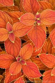 What Is Orange Flower Water - the 25 best orange flowers ideas on pinterest flowers
