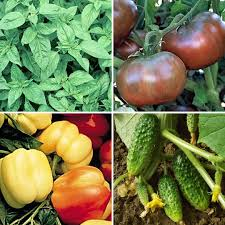 locavore gardening best bet veggies for chicago apartment therapy