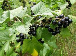 Planting Grapes In Backyard Kiwi And 11 Other Unusual Fruits You Can Totally Grow In Your