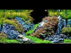 Most Beautiful Aquascapes Must Watch My Top Best Favourite 100 Aquascape Aquarium