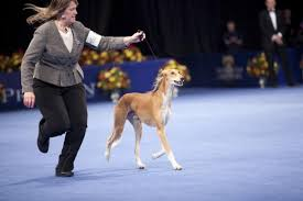 Dog Show Thanksgiving Day Thanksgiving Day Dog Show 2016 Bootsforcheaper Com