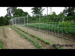 Pole Bean Trellis How To Plant And Grow Pole Beans Bush Beans Lima Beans And Other