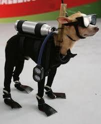 Spy Costumes Halloween 10 Pets Ready Halloween