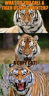 Copy Cat Meme - what do you call a tiger using a printer a copy cat meme