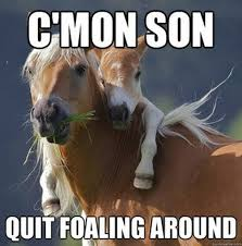 Horse Riding Meme - funny horse riding memes