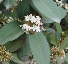 bushman s poison naturally beautiful