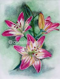 beautiful colour drawings of flowers great drawing