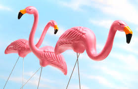 all about pink flamingos