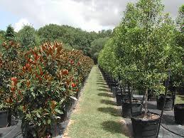 trees nursery thenurseries