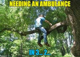 Tree Meme - tree cutter memes imgflip