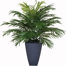 Indoor Plant Arrangements Best 25 Buy Indoor Plants Online Ideas On Pinterest Indoor