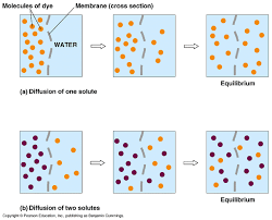 diffusion and osmosis worksheet preschoolers diffusion and osmosis