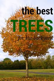 best 25 trees to plant ideas on landscaping trees