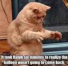 Cat Meme Images - 25 funny cat memes orange tabby cats tabby cats and captions