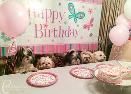 birthday cakes for dogs shih tzu birthday party on a budget oh my shih tzu