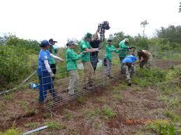 native plant restoration waimea valley