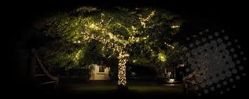 Fairy Lights In Trees by Home Deco Light