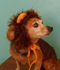 crocheted lion hat for cat or dog lion mane hat for pet lion