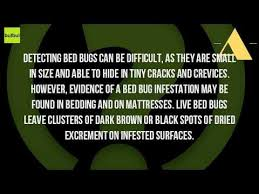 can you see bed bugs with a black light can you see bed bugs youtube