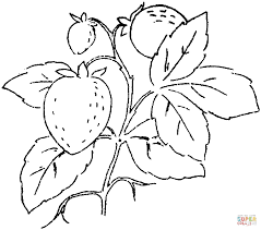 three strawberries on the branch coloring page free printable
