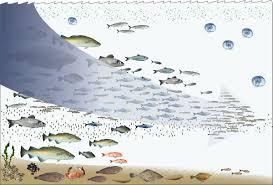 environmental impact of fishing wikipedia