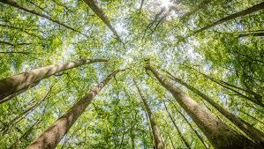 South Carolina national parks images Congaree national park com%2