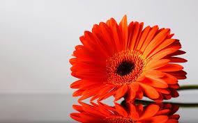 best hdq orange flowers pictures best 42 hd widescreen wallpapers