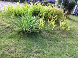 natural landscaping ideas u2014 ananddhillon decors