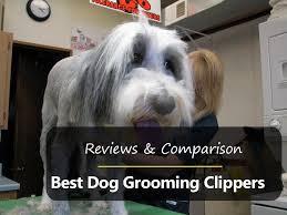 shaving a australian shepherd top 5 best dog clippers in 2017 reviews u0026 comparison crittersitca