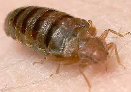 bed bug exterminator las vegas bed bugs inspection las vegas and henderson five star home