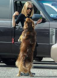 movies with australian shepherds amanda seyfried shares broccoli with dog finn during a break from