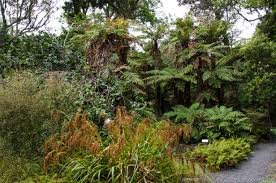 native plants new zealand fernglen native plant gardens is a great collection of new zealand
