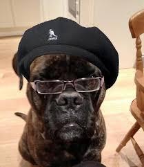 Dog With Glasses Meme - dog looks like samuel l jackson named samuel l dogson photo