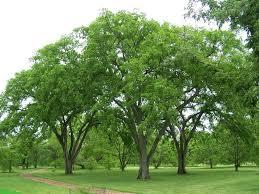 the elm b rocke landscaping