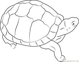 eastern box turtle coloring free turtle coloring pages