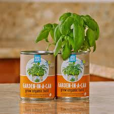 amazon com back to the roots garden in a can grow organic basil