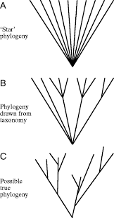 phylogenetic approaches in comparative physiology journal of