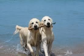 bagno per cani spiagge per cani toscana animali